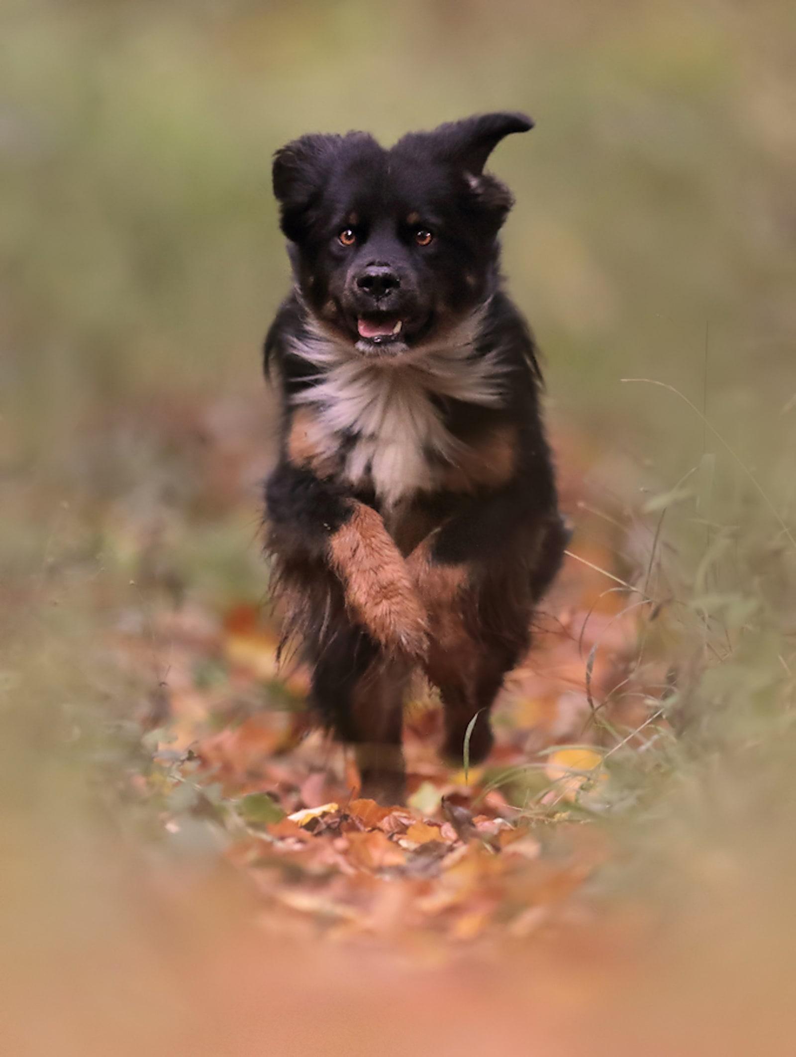 Hundeschule in Neustadt Ostholstein - Kursübersicht